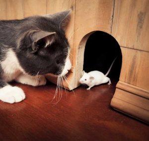 gatto-topo